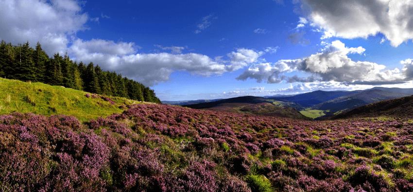 paysage irlande prairie
